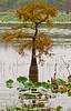 Lake Saint Joseph near Winter Quarters, LA - D4-C1-0001 - 72 ppi