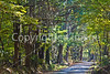 Russum-Westside Road on Grant's path to Port Gibson, MS  - D6 - C3-0030 - 72 ppi