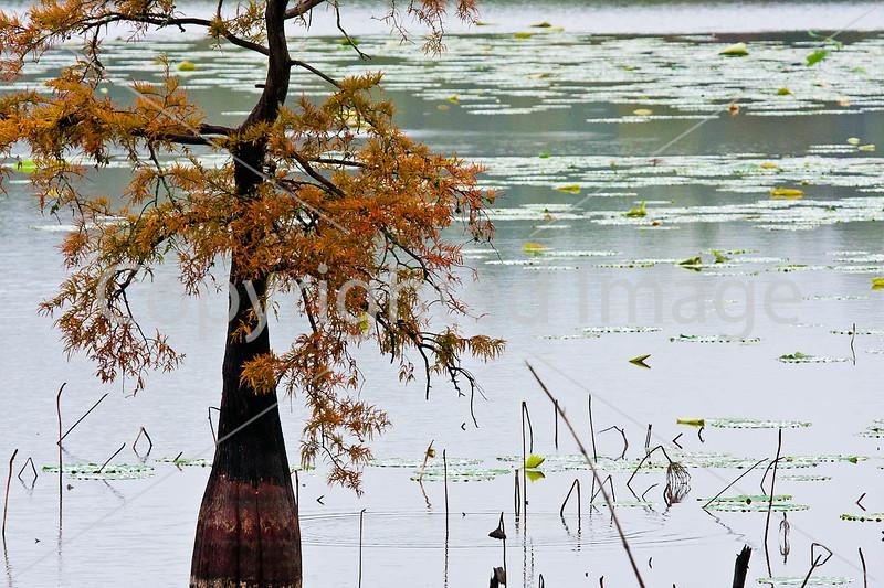 Lake Saint Joseph near Winter Quarters, Louisiana - D4-C4-0022 - 72 ppi