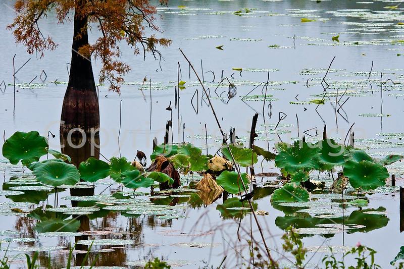 Lake Saint Joseph near Winter Quarters, Louisiana - D4-C4-0014 - 72 ppi