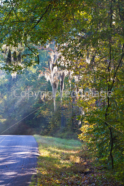MS 552 - historic Bruinsburg Road - near Port Gibson, MS - D6 - C1-0035 - 72 ppi