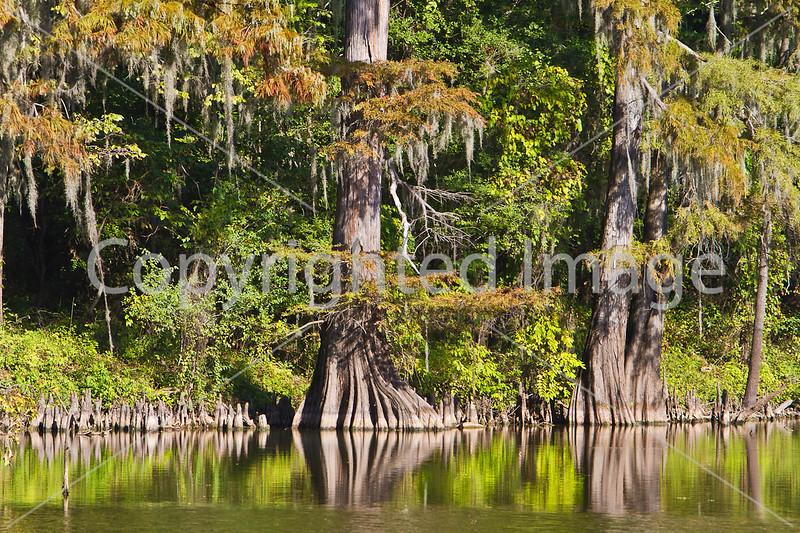 Alligator Lake, Chickasaw Bayou loop near Vicksburg, MS - D4-C1-0027 - 72 ppi