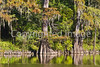 Alligator Lake, Chickasaw Bayou loop near Vicksburg, MS - D4-C1-0027 - 72 ppi