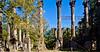 Ruins of Windsor Plantation near Port Gibson, Mississippi - D5 - C2-0129 - 72 ppi