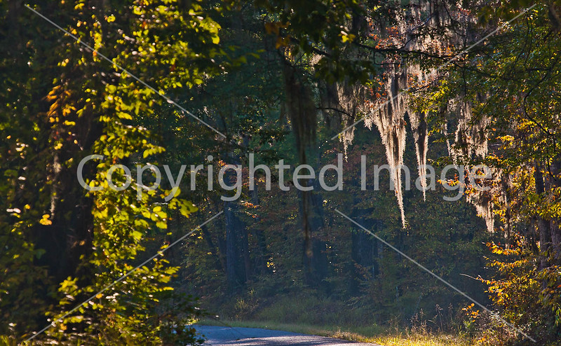 MS 552 - historic Bruinsburg Road - near Port Gibson, MS - D6 - C4-0025 - 72 ppi