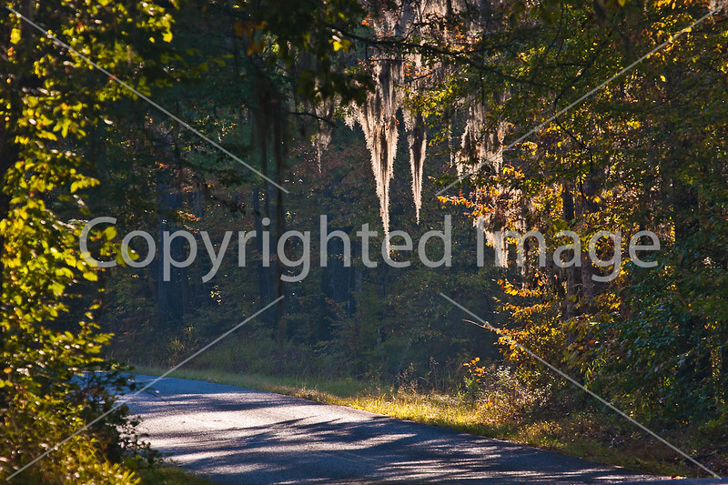 MS 552 - historic Bruinsburg Road - near Port Gibson, MS - D6 - C4-0028 - 72 ppi