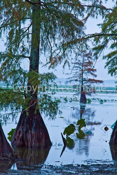 Winter Quarters site on Lake Saint Joseph in Louisiana - D4-C3-0007 - 72 ppi