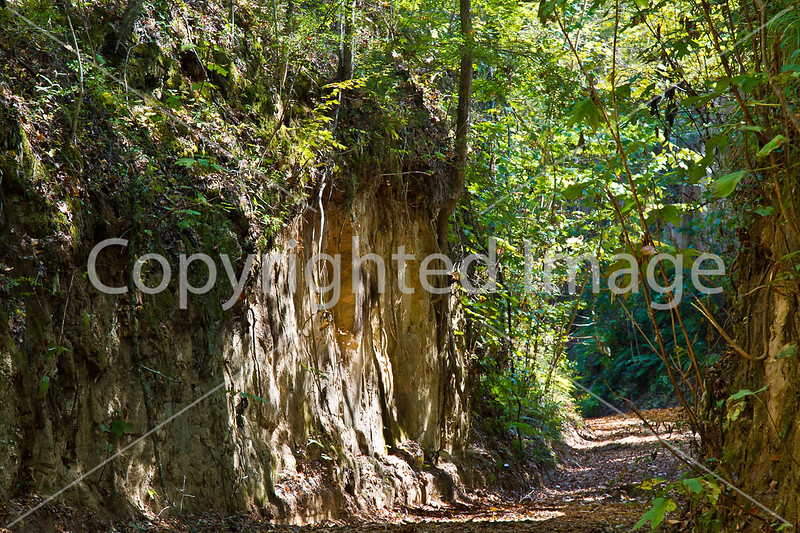 Shaifer Road on Grant's path to Port Gibson, MS - D6 - C3-0060 - 72 ppi