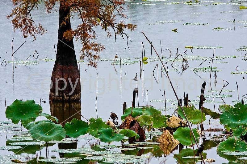 Lake Saint Joseph near Winter Quarters, Louisiana - D4-C4-0016 - 72 ppi