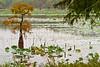 Lake Saint Joseph near Winter Quarters, LA - D4-C1-0003 - 72 ppi