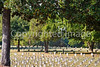 Vicksburg Nat'l Military Park, MS - D2-C3-0128 - 72 ppi
