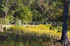 Vicksburg Nat'l Military Park, MS - D2-C1-0079 - 72 ppi