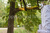 Vicksburg Nat'l Military Park, MS - D2-C1-0005 - 72 ppi
