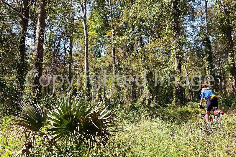 Singletrack near Yucatan Lake along Grant's Route in Louisiana - D2-C3 -0095 - 72 ppi