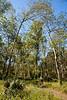 Singletrack near Yucatan Lake along Grant's Route in Louisiana - D2-C3 -0091 - 72 ppi