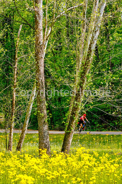 Thin-tire cyclist at Fort Pillow State Historic Area in Tennessee-0239 - 72 ppi