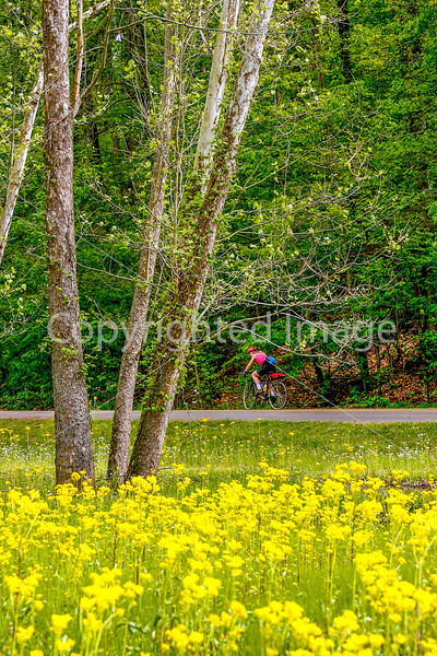 Thin-tire cyclist at Fort Pillow State Historic Area in Tennessee-0190 - 72 ppi