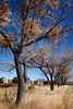 New Mexico - Fort Selden State Monument north of Las Cruces - C8b-'08-1360 - 72 ppi