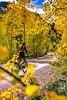 Mountain biker on Colorado's Alpine Loop - Lake City to Engineer Pass in San Juan Mts  - 1 - 72 ppi
