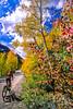 Mountain biker on Colorado's Alpine Loop - Lake City to Engineer Pass in San Juan Mts  - 10 - 72 ppi