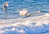 Pelicans; Gulf of Mexico; Bradenton Beach, FL - 72 dpi-0258 - 72 ppi