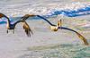 Gulf of Mexico; Bradenton Beach, FL - 72 dpi - sRGB-0071 - 72 ppi