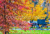 Amish buggy in Mesopotamia, Ohio -0351 - 72 ppi