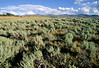 Yellowstone NP - View from Blacktail Deer Creek in northern Yel  NP - - 72 dpi