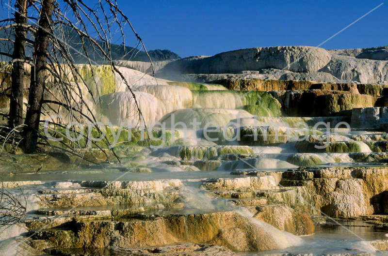 Yellowstone NP - terrace at Mammoth Hot Springs - 5 - 72 dpi