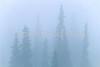 Glacier National Park, Montana - 81 - 72 dpi