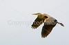 Bird - 0139 - 72 dpi - crop