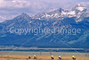 ACA bike tourers in Tetons Nat'l Park, Wyoming - 17 - 72 ppi