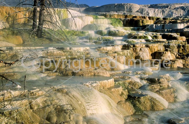 Yellowstone NP - terrace at Mammoth Hot Springs - 4 - 72 dpi