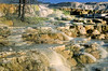 Yellowstone NP - terrace at Mammoth Hot Springs - 4 - 72 dpi