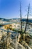 Yellowstone NP - terrace at Mammoth Hot Springs - 9 - 72 dpi