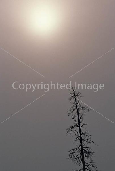 Yellowstone NP - Lone tree against winter sky - 72 dpi