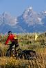 Mountain biker pulling BOB trailer on double-track just outside Grand Teton Nat'l Park - 10 - 72 ppi