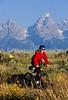 Mountain biker pulling BOB trailer in Grand Teton Nat'l Park - 6 - 72 ppi