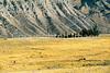 B wy yellowstone 1j - ORps - 72 dpi