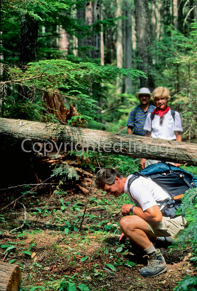 Hiker(s) in Glacier National Park, Montana - 82 - 72 dpi