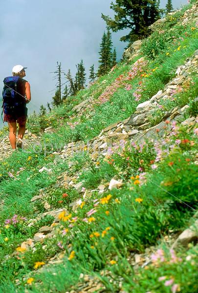 HI mt glacier 3 - ORps - jpeg - Hiker descending on Swiftcurrent Pass Trail in Glacier Nat
