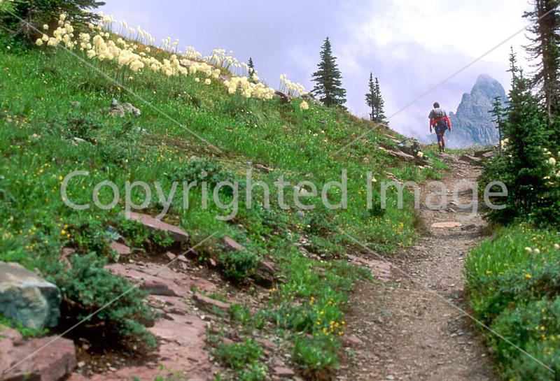 HI mt glacier 9 - ORps - jpeg - Hiker descending on Swiftcurrent Pass Trail in Glacier Nat