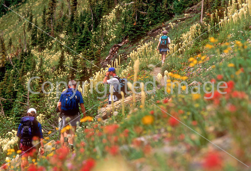 HI mt glacier 47 - ORps - jpeg - Hiker(s) in Montana's Glacier National Park