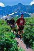Hiker(s) in Glacier National Park, Montana - 66 - 72 dpi
