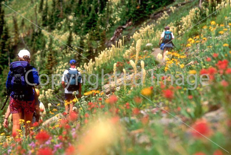 HI mt glacier 46 - ORps - jpeg - Hiker(s) in Montana's Glacier National Park
