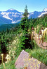 HI can water 16 - ORps - jpeg - Hikers in Canada's Waterton Lakes National Park-2