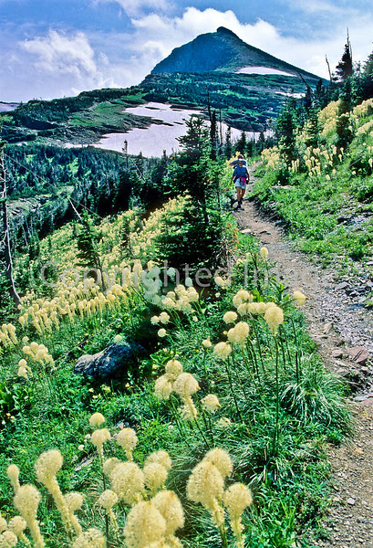 Hiker(s) in Glacier National Park, Montana - 64 - 72 dpi