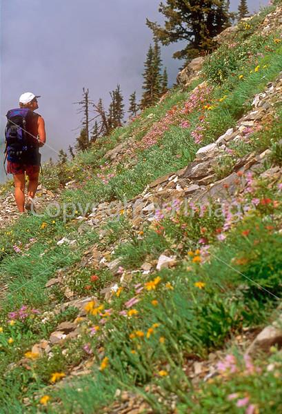 HI mt glacier 45 - ORps - jpeg - Hiker on Highline Trail along the Garden Wall in Glacier Nat