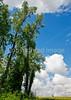Bayou & fields riding north of Kaskaskia, Illinois, along Mississippi River-0086 - 72 ppi-2