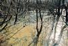 Flooded Illinois prairie, February - 3 - 72 ppi